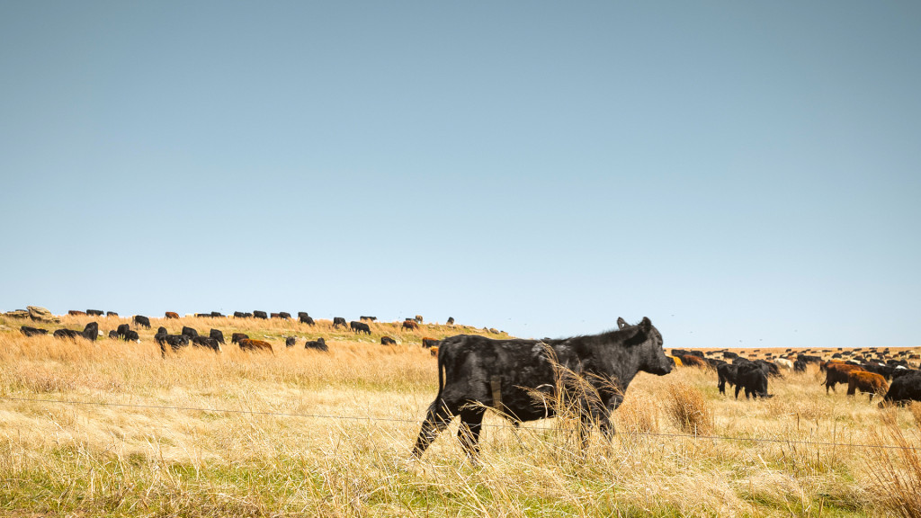 Grassroots Carbon will help ranchers use regenerative practices to capture carbon in the soil, courtesy photo